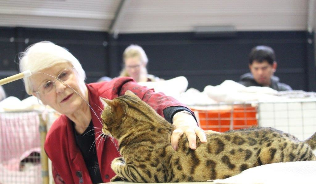 Photo 10 of Riley the male Bengal cat.