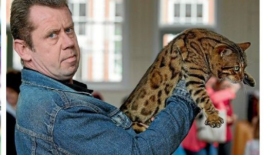 Photo 8 of Riley the male Bengal cat.